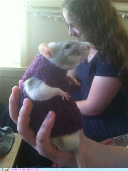 This rat is wearing a sweater. Your arguments are invalid.